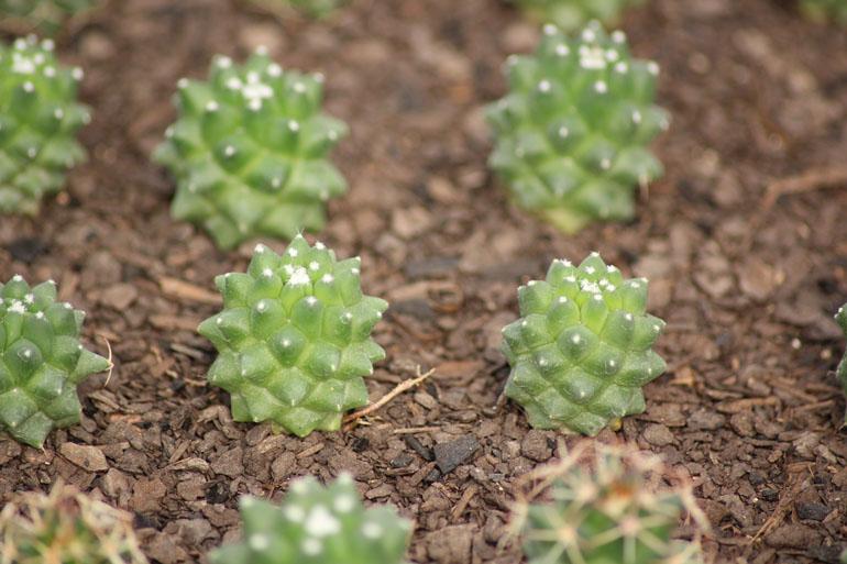 Suculentas dr cactus flores e plantas ornamentais - Variedades de plantas de interior ...